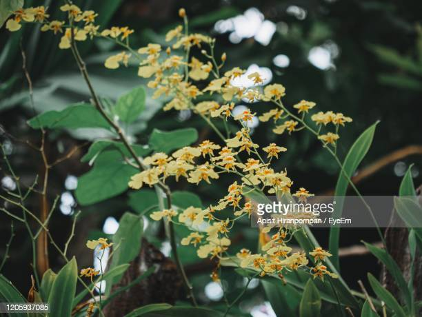 close-up of flowering plant - apisit hiranpornpan stock pictures, royalty-free photos & images