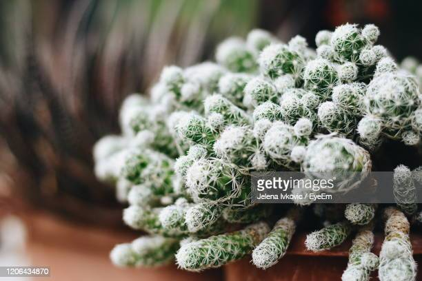 close-up of flowering plant - jelena ivkovic stock pictures, royalty-free photos & images