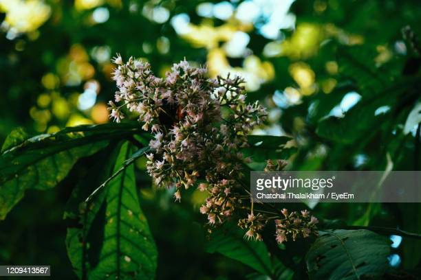 close-up of flowering plant - chatchai thalaikham stock pictures, royalty-free photos & images