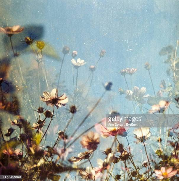 close-up of flowering plants against blue sky - cross processed stock pictures, royalty-free photos & images