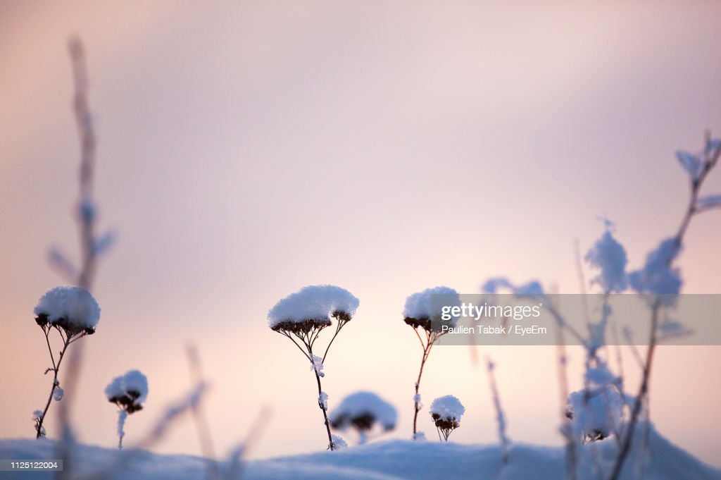 Close-Up Of Flowering Plants Against Sky During Winter : Stockfoto