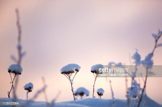 close-up of flowering plants against sky during winter - paulien tabak stock pictures, royalty-free photos & images
