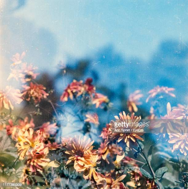 close-up of flowering plants by water - cross processed stock pictures, royalty-free photos & images