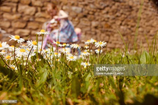 close-up of flowering plants growing on field - hutton stock photos and pictures