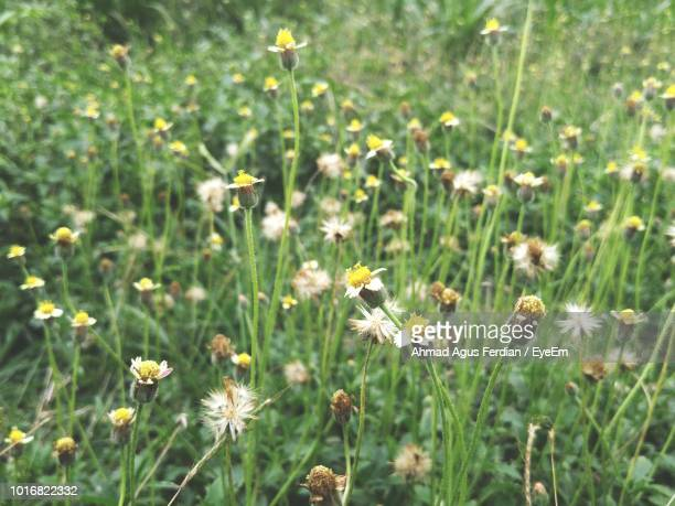 close-up of flowering plants on field - eyeem stock pictures, royalty-free photos & images