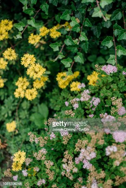 close-up of flowering plants on field - flowering plant stock photos and pictures