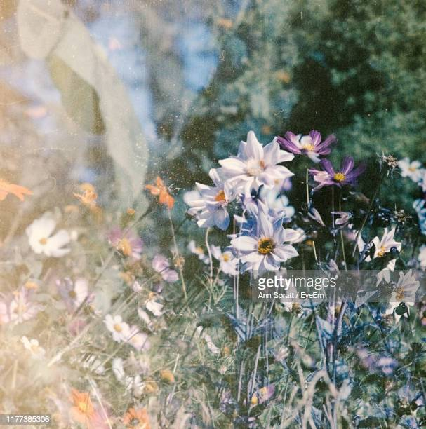 close-up of flowering plants on field - cross processed stock pictures, royalty-free photos & images