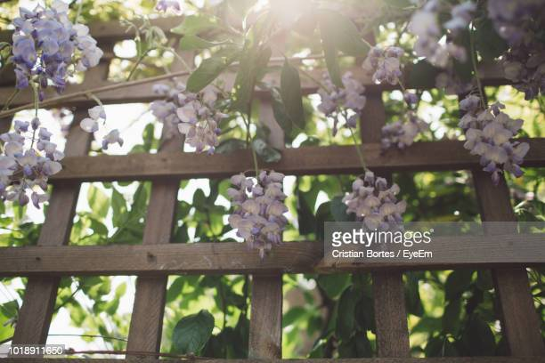 close-up of flowering plants on railing against trees - bortes stock pictures, royalty-free photos & images