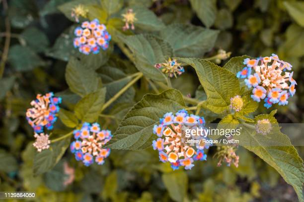 close-up of flowering plants - jeffrey roque stock photos and pictures