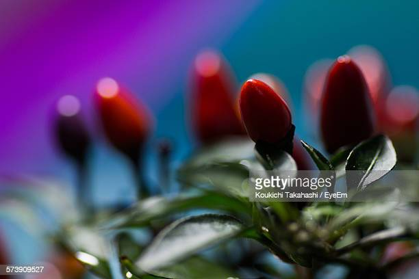 close-up of flowers against blurred background - koukichi koukichi stock photos and pictures