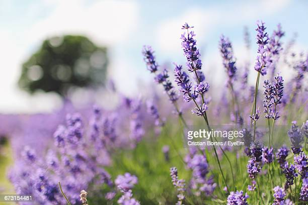 close-up of flowers against blurred background - bortes cristian stock photos and pictures