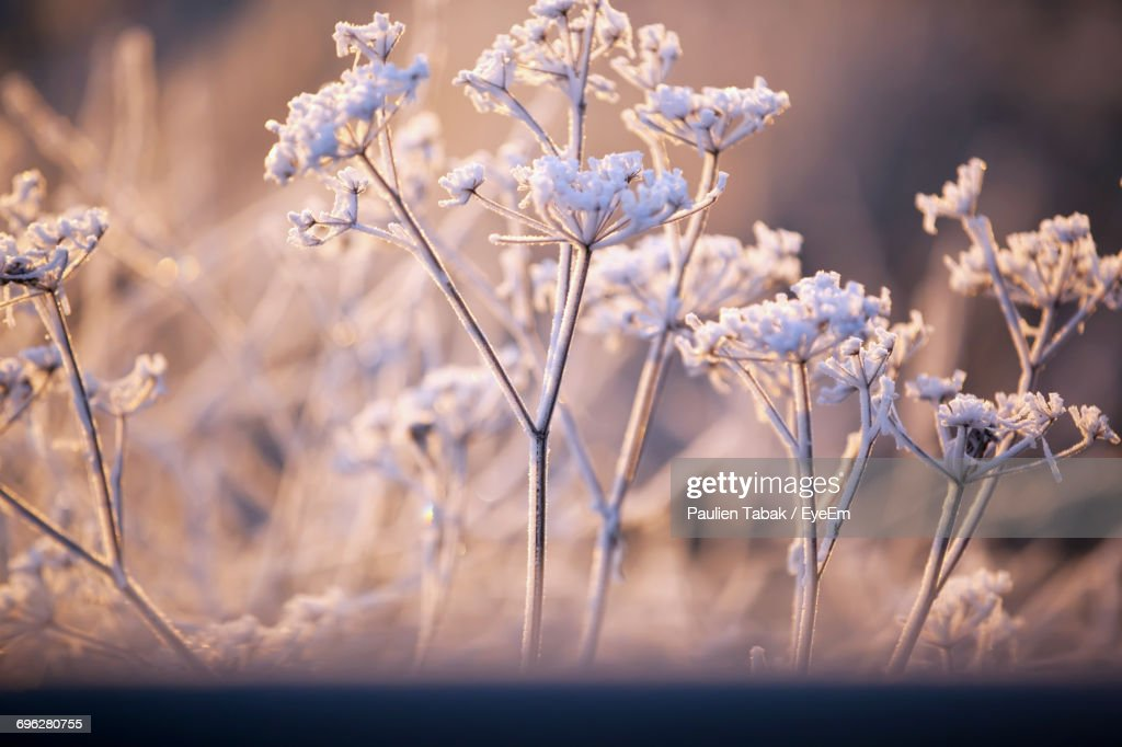 Close-Up Of Flowers Against Blurred Background : Stockfoto