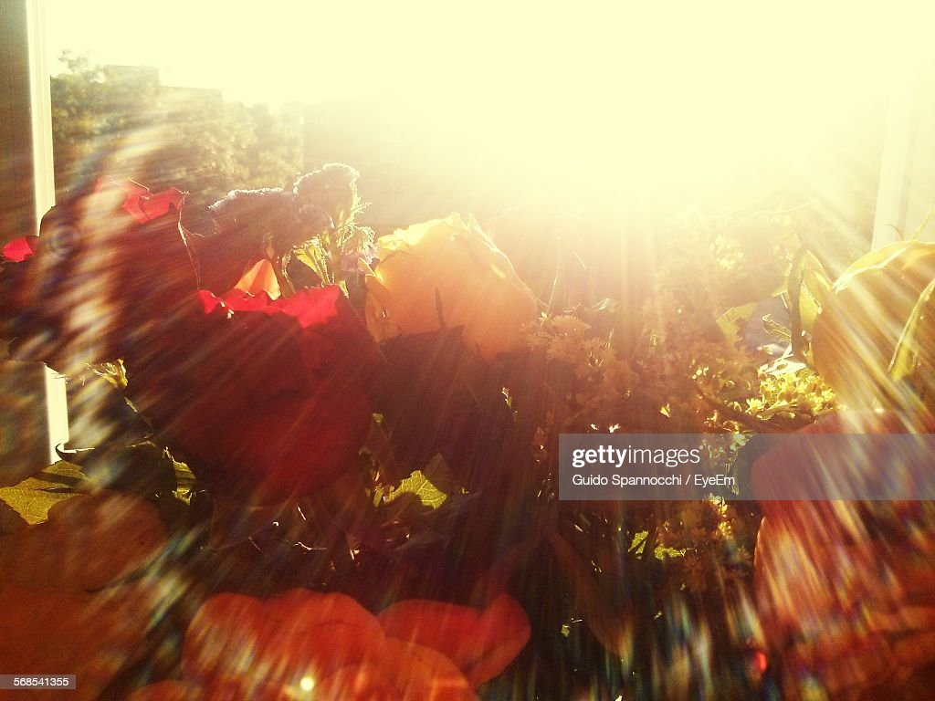 Close-Up Of Flowers Against Bright Sun : Stock Photo