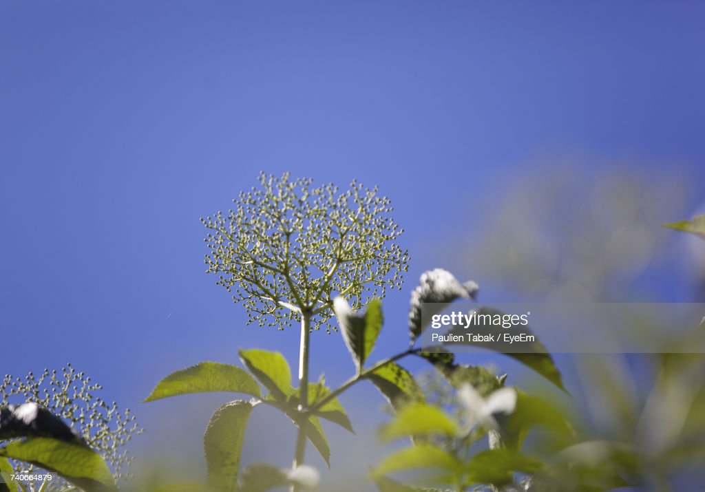 Close-Up Of Flowers Against Clear Blue Sky : Stockfoto