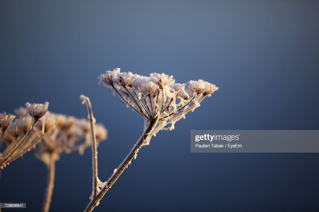 Close-Up Of Flowers Against Clear Sky : Stockfoto
