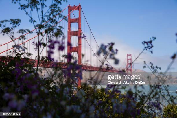 Close-Up Of Flowers Against Golden Gate Bridge