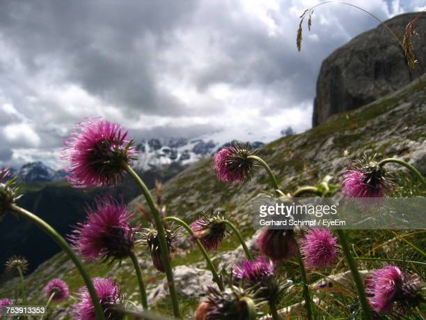 close-up of flowers against sky - gerhard schimpf stock photos and pictures