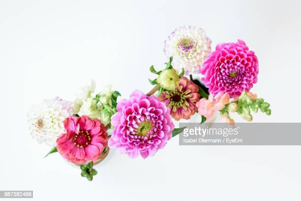 Close-Up Of Flowers Against White Background