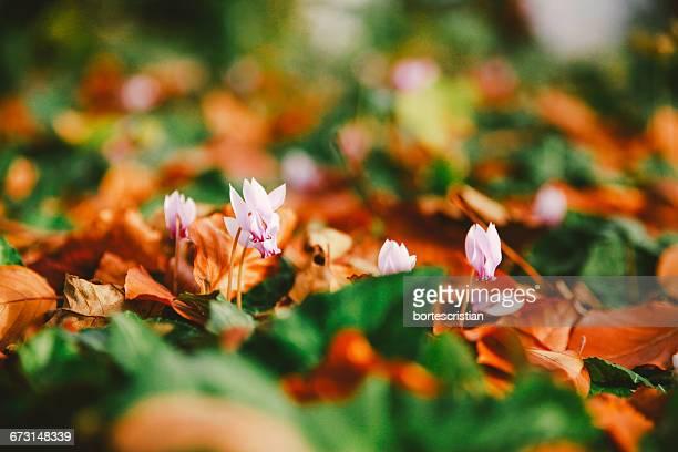 close-up of flowers and leaves - bortes fotografías e imágenes de stock
