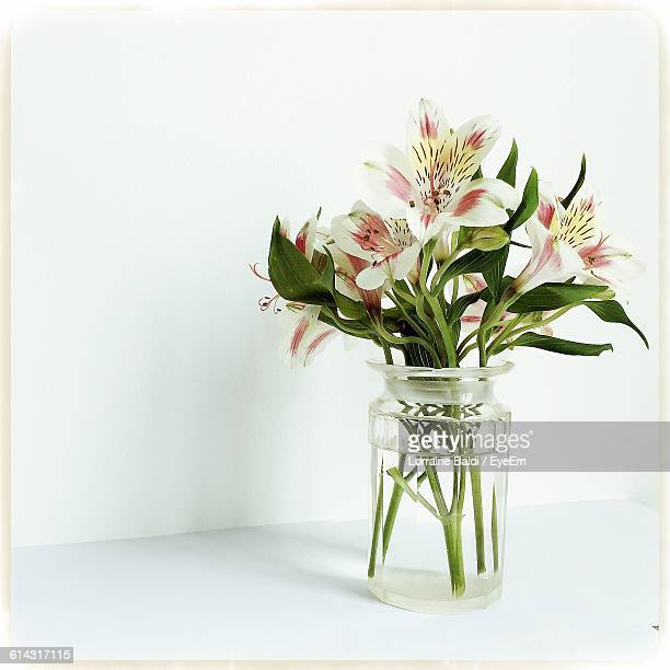 Close-Up Of Flowers And Plant In Vase Against White Background
