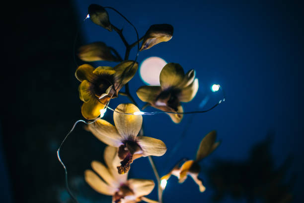 close-up of flowers blooming at night - flower moon stock pictures, royalty-free photos & images