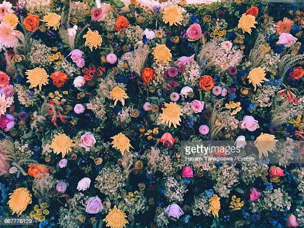 close-up of flowers blooming in field - 繁栄 ストックフォトと画像