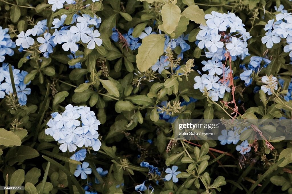 Close-Up Of Flowers Blooming In Garden : Stock Photo