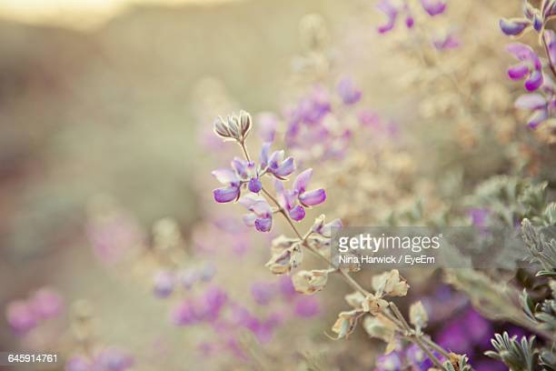 close-up of flowers blooming in garden - ca nina stock pictures, royalty-free photos & images