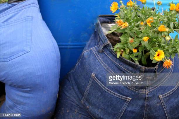 close-up of flowers blooming in jeans - sabine kriesch stock-fotos und bilder
