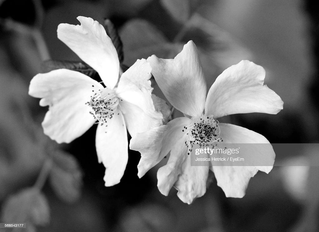 Close-Up Of Flowers Blooming In Yard : Foto de stock