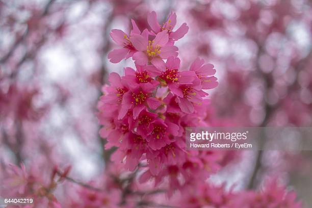 close-up of flowers blooming on tree - howard,_wisconsin stock pictures, royalty-free photos & images