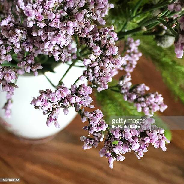 close-up of flowers blooming on tree - glycine photos et images de collection