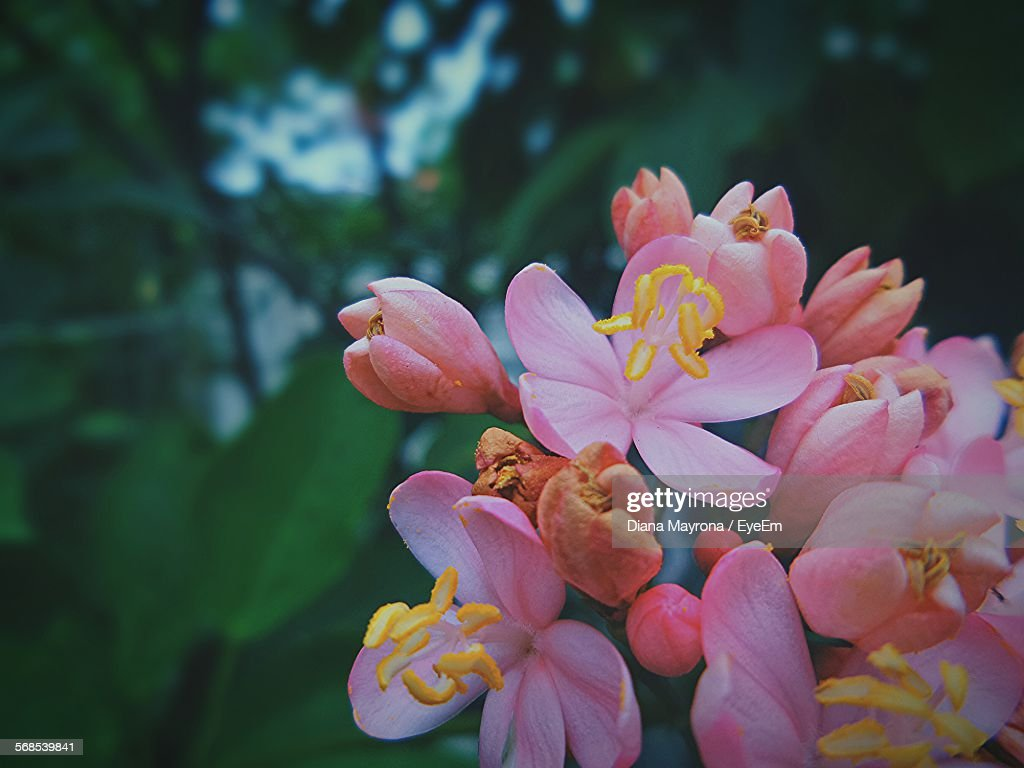 Close-Up Of Flowers Blooming Outdoors : Stock Photo