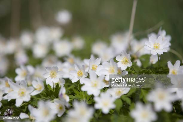 close-up of flowers blooming outdoors - paulien tabak stock pictures, royalty-free photos & images