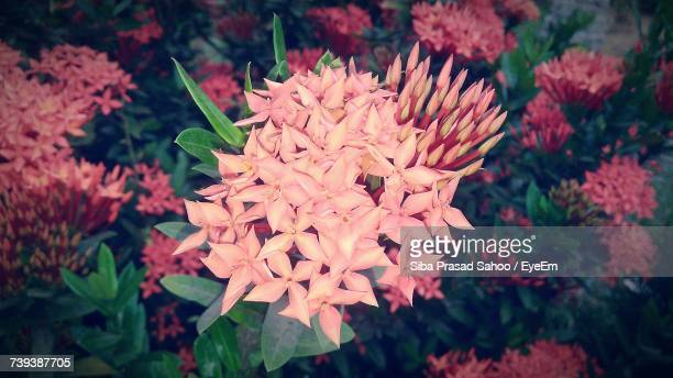 close-up of flowers blooming outdoors - siba stock pictures, royalty-free photos & images