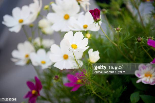 close-up of flowers blooming outdoors - brezinska stock pictures, royalty-free photos & images