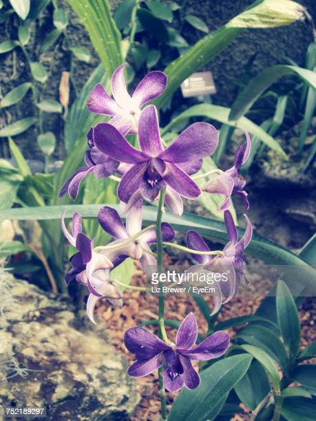 close-up of flowers blooming outdoors - liz brewer stock photos and pictures