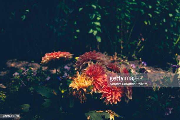 close-up of flowers blooming outdoors - albrecht schlotter foto e immagini stock