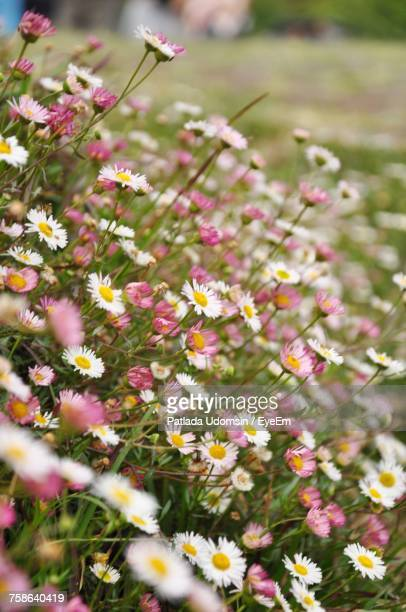 close-up of flowers blooming outdoors - flower part stock pictures, royalty-free photos & images