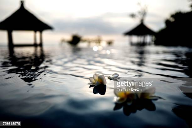 Close-Up Of Flowers Floating On Water