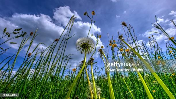 Close-Up Of Flowers Growing In Field Against Sky