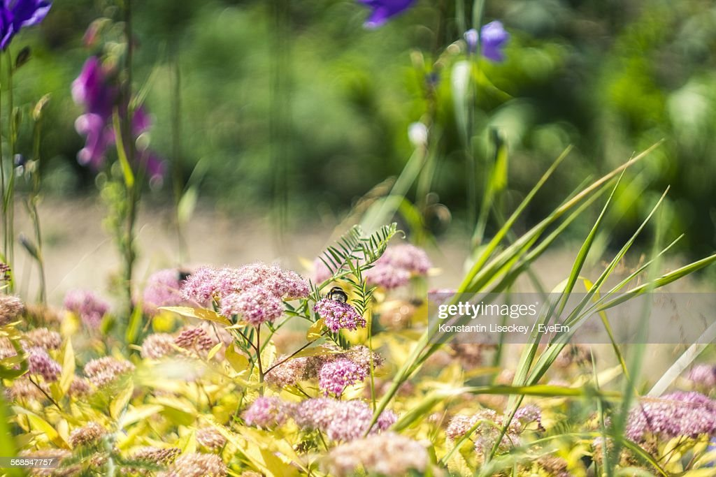 Close-Up Of Flowers Growing In Field : Stock Photo