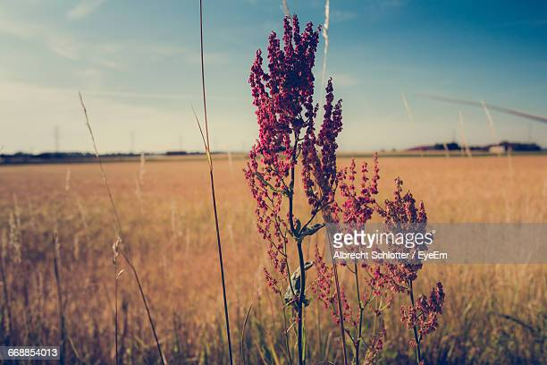 close-up of flowers growing in field - albrecht schlotter stock photos and pictures