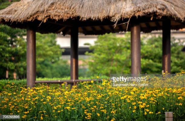 close-up of flowers growing in field - bucheon stock pictures, royalty-free photos & images