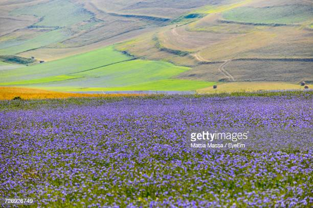close-up of flowers growing in field - massa stock pictures, royalty-free photos & images