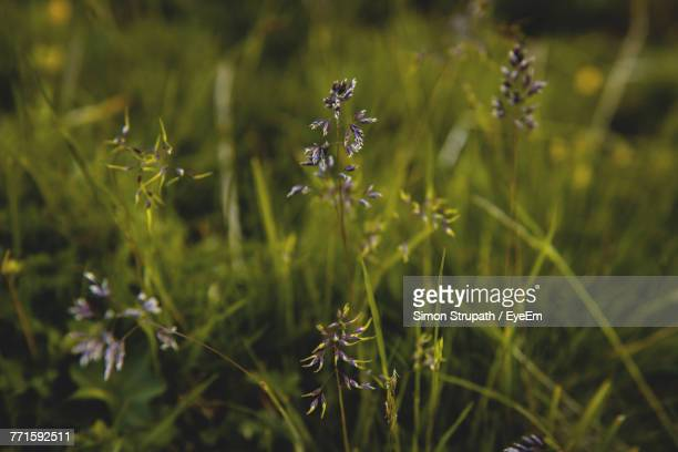 Close-Up Of Flowers Growing In Field