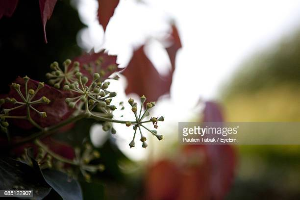close-up of flowers growing on branch - paulien tabak photos et images de collection