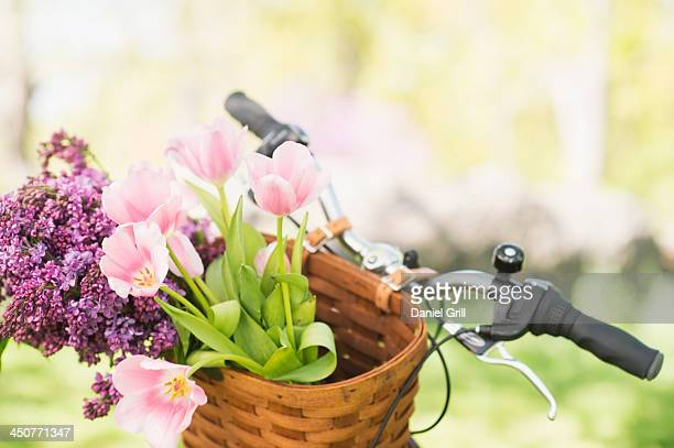Close-up of flowers in basket