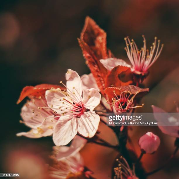 close-up of flowers in bloom - frische stockfoto's en -beelden