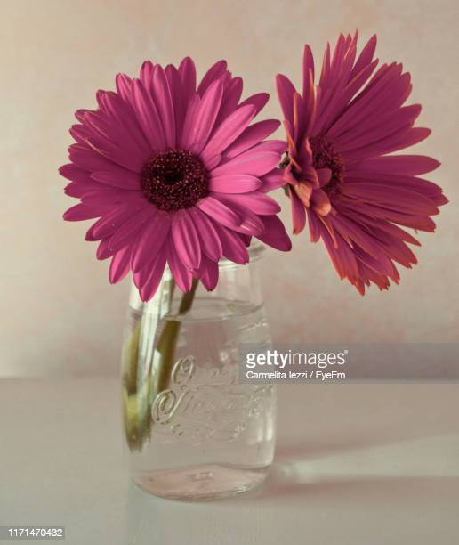 close-up of flowers in glass vase - carmelita iezzi stock pictures, royalty-free photos & images